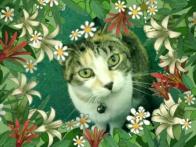 Savannah ~ my caliby (calico tabby)